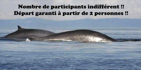 Avec Fairplay voyages, partez à la découverte du Canada en groupes ou en individuels. Ville, parc, baleine, shooping, tout est prévu.