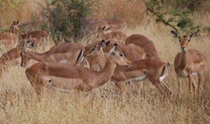 Venez découvrir avec Fairplay voyage le Parc Kruger et ses animaux