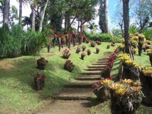Venez découvrir les splendides jardins antillais avec Fairlpay voyages